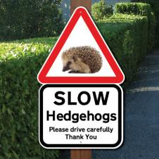 Hedgehog Alert!